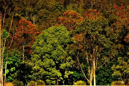 Forest, Bushland