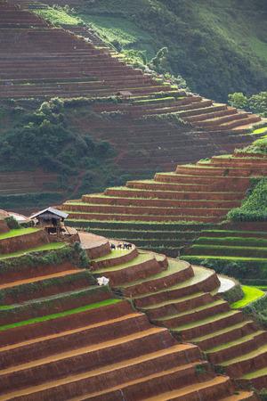 Rice terraces on water season in Mu Cang Chai district  Vietnam
