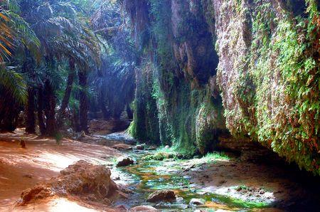 oasis in the desert Sahara in mauritania