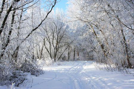 Photo pour cold winter snow forest tree frozen - image libre de droit