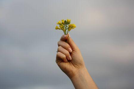 Foto de Hand holding yellow flowers on cloudy sky with copy space - Imagen libre de derechos