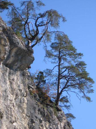 gnarled trees above a gulch