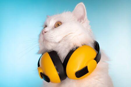 Photo pour Portrait of fluffy cat in headphones on blue background. Music, earphones, cool animal concept. Studio photo. White pussycat. - image libre de droit