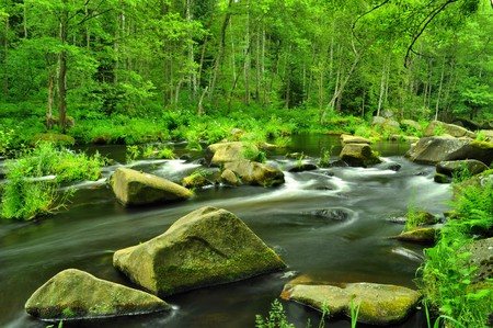 wild river through green forest