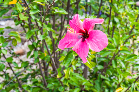 Pretty Pink Hibiscus Affirmation