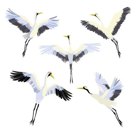 Ilustración de Vector watercolor set of illustrations bird crane. White stork . - Imagen libre de derechos