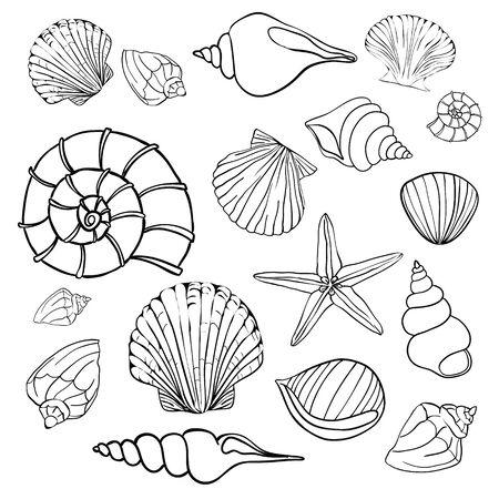 Illustration pour Hand drawn vector illustrations - collection of seashells. Marine set. - image libre de droit