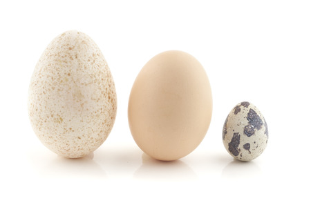 A hen egg, turkey egg and a quail egg. Still Life photography