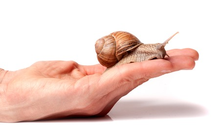 Snail on the hand isolated on white background.