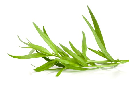Sprig of tarragon isolated on a white background. Artemisia dracunculus