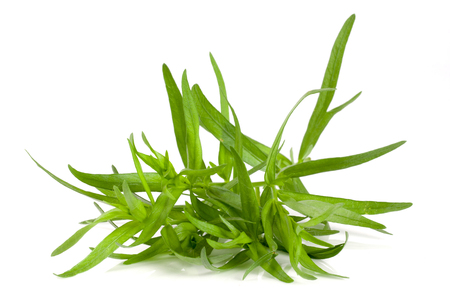 tarragon isolated on a white background. Artemisia dracunculus