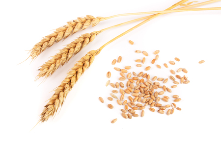 grain and ears of wheat isolated on white background. Top view.