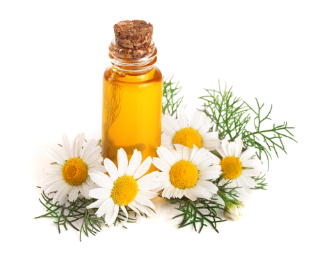 Foto per bottle with essential oil and fresh chamomile flowers isolated on white background - Immagine Royalty Free