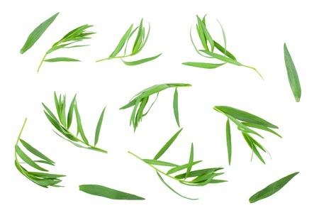 Photo pour tarragon or estragon isolated on a white background. Artemisia dracunculus. Top view. Flat lay - image libre de droit