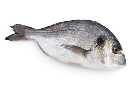Photo pour Fish dorado isolated on white background - image libre de droit