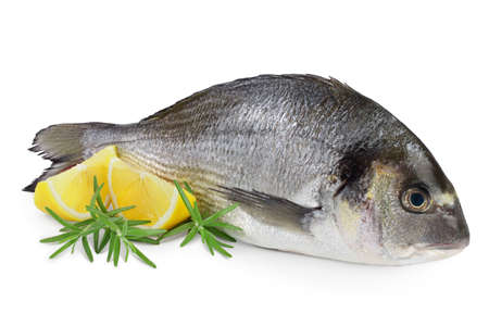 Photo pour Fish dorado isolated on white background with clipping path and full depth of field. - image libre de droit