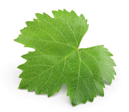Foto für Grape leaf isolated on white background with clipping path and full depth of field. Top view. Flat lay - Lizenzfreies Bild