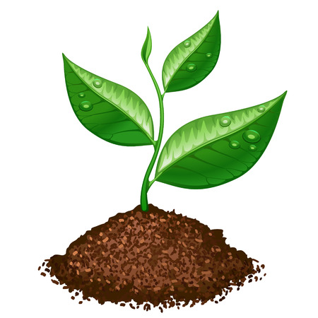 Illustration for green plant - Royalty Free Image
