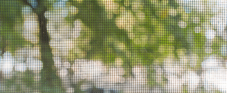Looking Out Through Screen Door or Window at Trees Outside
