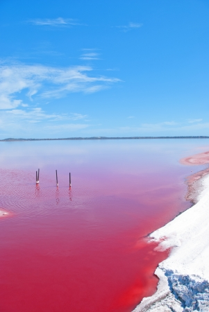Pink Lake, Western Australia  This lake turns pink in summer cause of an algae with red pigments  Those plants are used for dyeing clothes red