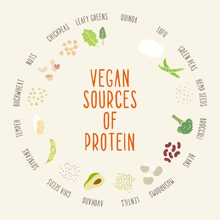 Vegan sources of protein. Vector hand drawn illustration
