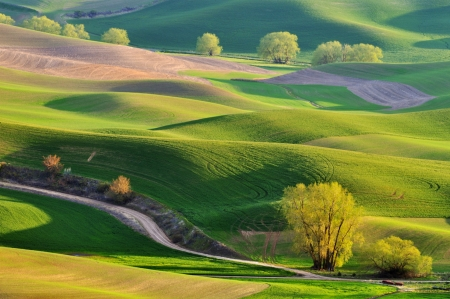 The rolling hills farmland in Palouse Washington