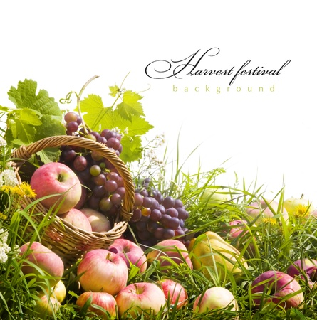 abstract autumn background with fruit on the grass