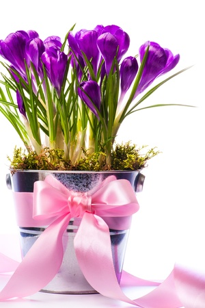 Beautiful spring flowers in bucket decorated with ribbon