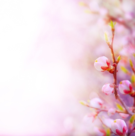 Beautiful spring blossoming tree on sky backgroundの写真素材