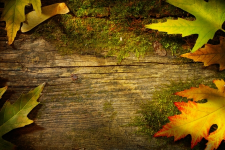 art	autumn  fall  leaf  on wood background の写真素材