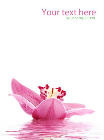 greetingcard with beautiful orchid against white background