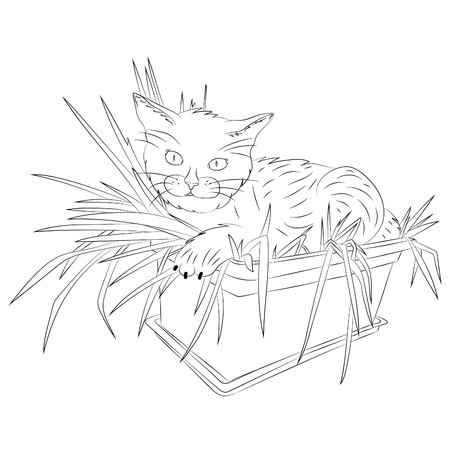 A cat lies in a flower pot.Vector illustration, abstract, black outline on a white background, hand-drawn