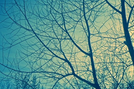 Naked branches of a tree against the dark blue sky
