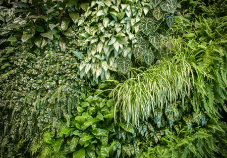 Photo for Green leaf wall texture background - Royalty Free Image