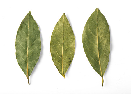 Photo for Dried bay leaves isolated on white with clipping path - Royalty Free Image