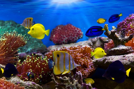 Foto de Coral Reef and Tropical Fish in Sunlight - Imagen libre de derechos