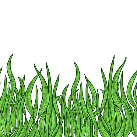 Illustration pour Spirulina. Algae. Sketch. Background, wallpaper, seamless, texture.Color - image libre de droit