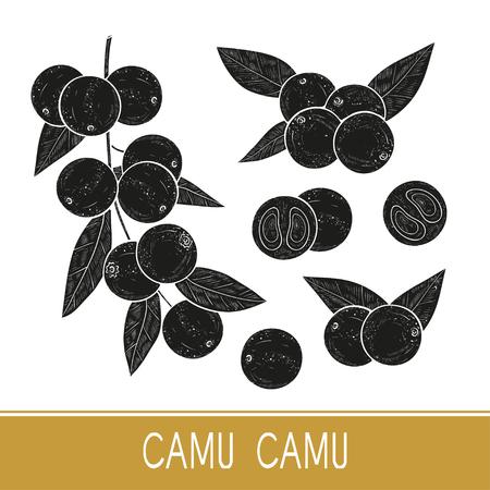 Illustration pour Camu camu. Branch, leaves, fruit, berry. Black silhouette on white background. Set. Monophonic. - image libre de droit