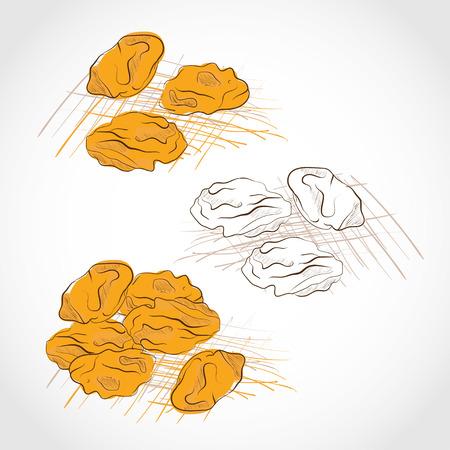 Illustration pour Raisins yellow. Dried. Grapes dry. Color pattern and black and white. Sketch. Set. - image libre de droit