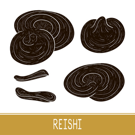Illustration pour Reishi. Mushroom. Set. Sketch. Black silhouette. - image libre de droit