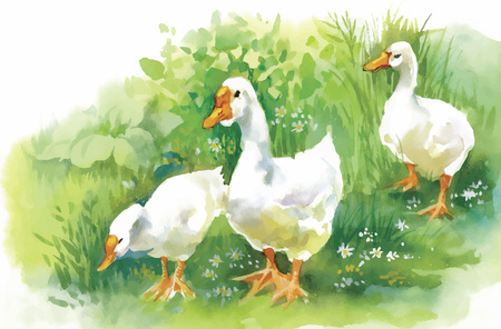 Geese flock swimming on pond watercolor vector illustration.