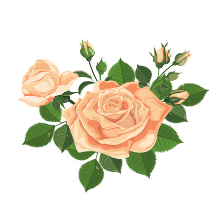 Illustration pour Vector. Bouquet of roses. Yellow flower. Watercolor illustration. Rose Bud isolated on white. Roses, buds, leaves and flowers. Wedding, birthday, design, invitation card Template - image libre de droit