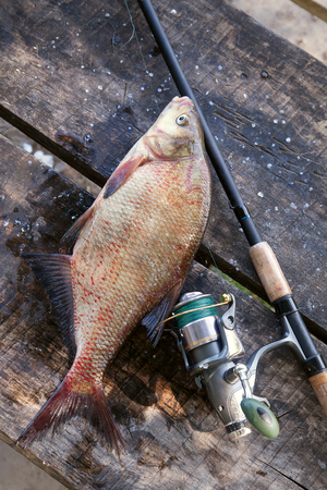Photo pour Fishing concept, trophy catch - just taken from the water big freshwater common bream known as bronze bream or carp bream (Abramis brama) and fishing rod with reel on vintage wooden background. - image libre de droit