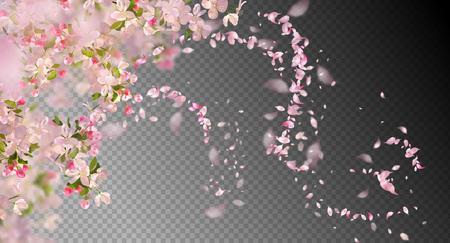 Illustration pour Spring Cherry Blossom flowers - image libre de droit