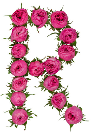 Letter R alphabet from flowers of roses, isolated on white background