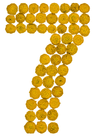 Arabic numeral 7, seven, from yellow flowers of tansy, isolated on white background
