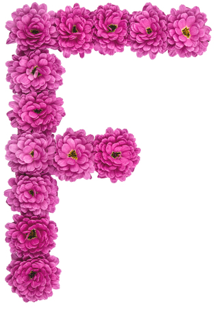 Letter F, alphabet from flowers of chrysanthemum, isolated on white background