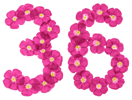 Arabic numeral 36, thirty six, from pink flowers of flax, isolated on white background