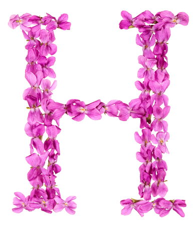 Letter H from alphabet, from flowers of violet, isolated on white background