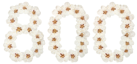 Numeral 800, eight hundred, from natural white flowers of apricot tree, isolated on white background